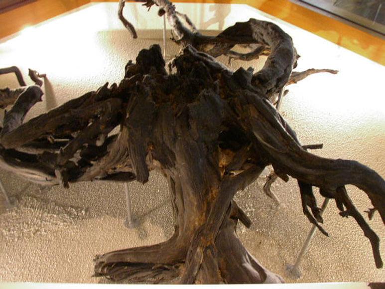 宮城県旅行観光地底の森ミュージアム