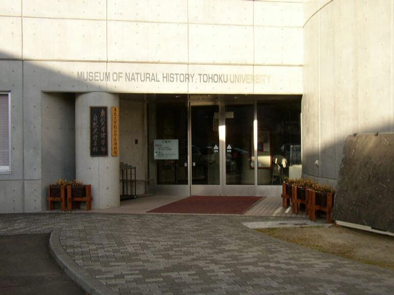 宮城県旅行観光東北大学総合学術博物館(東北大学理学部自然史標本館)