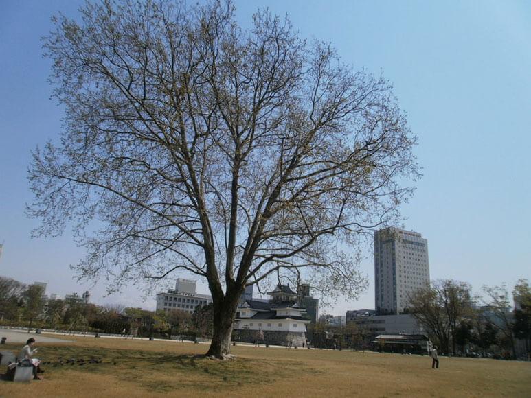 富山県旅行観光富山城址公園