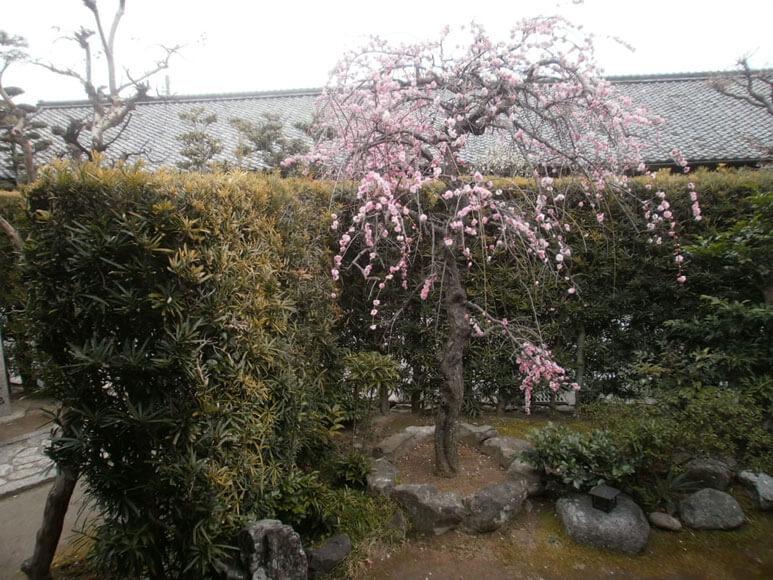三重県旅行観光松阪市御成番屋敷