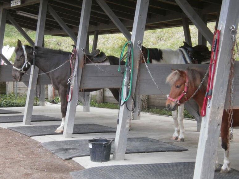 群馬県旅行観光伊香保グリーン牧場馬