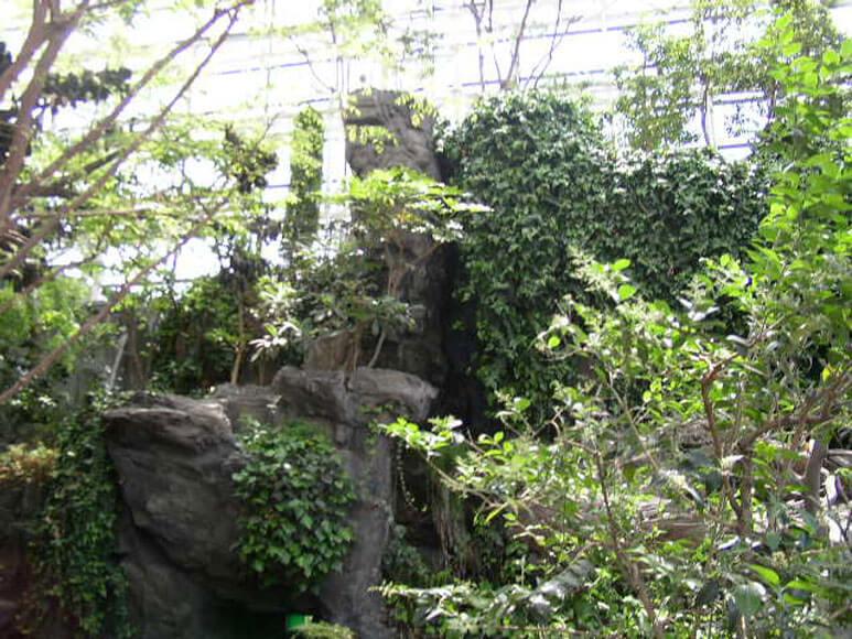 大阪府旅行観光海遊館日本の森