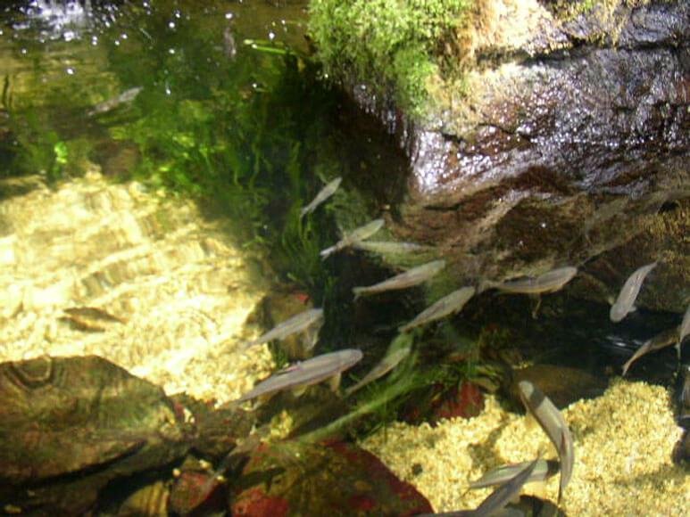 大阪府旅行観光海遊館魚