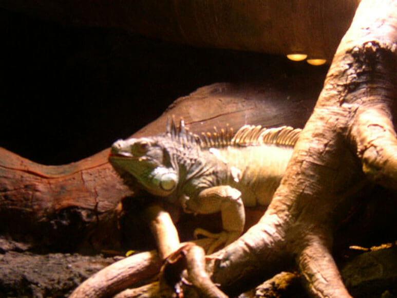 大阪府旅行観光海遊館エクアドル熱帯雨林