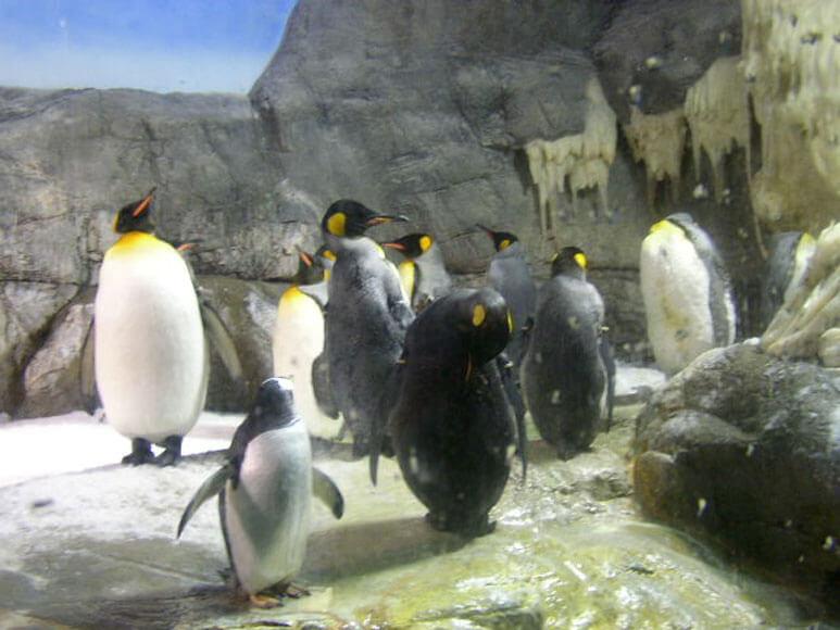 大阪府旅行観光海遊館南極大陸ペンギン