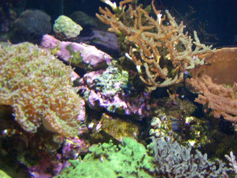 大阪府旅行観光海遊館グレート・バリア・リーフ珊瑚礁